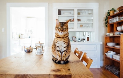 6 Kitchen Enhancements For Renters