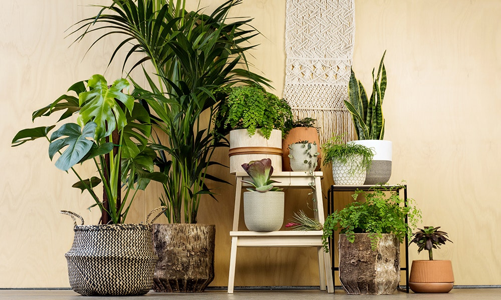 The Best House Plants, and How to Care For Them